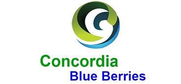 Concordia Blue Berries